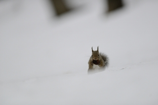 now squirrel (2).jpg